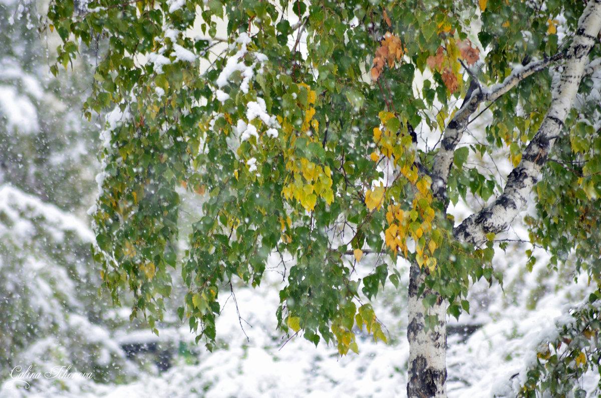 Первый снегопад - galina tihonova