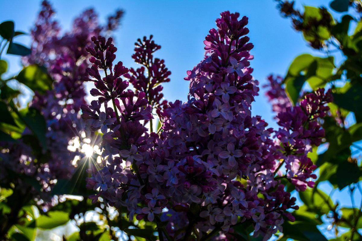 Солнце забрало весну и лето - Света Кондрашова