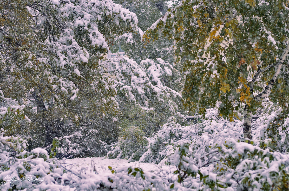 Снегопад октября - galina tihonova