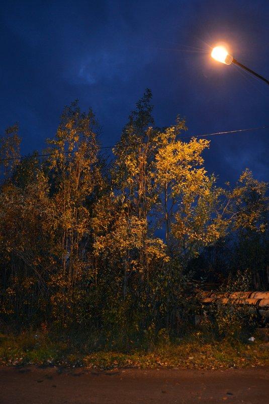 Осенний вечер - Ольга