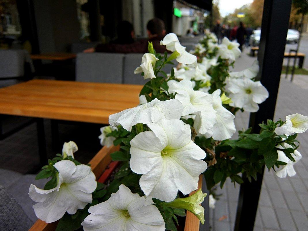 Белые цветы - Наталья Тимошенко