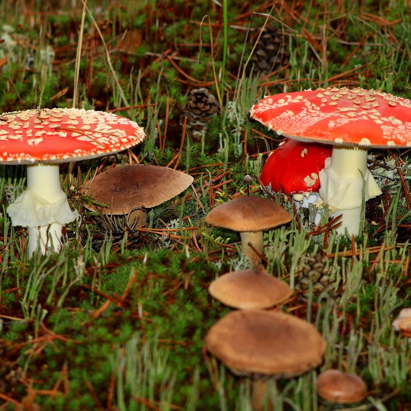 На парад, на парад Строем шёл отряд грибят - Cветёлка ***