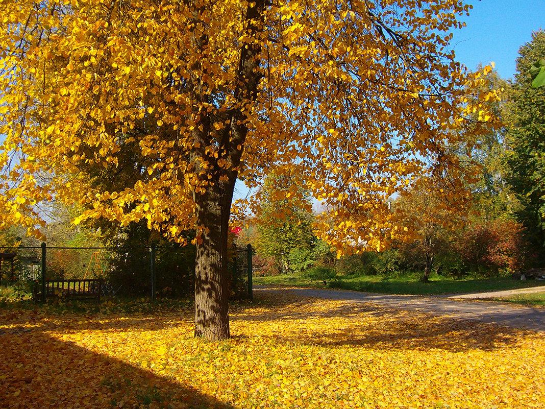 На ковре из желтых листьев - Grey Bishop