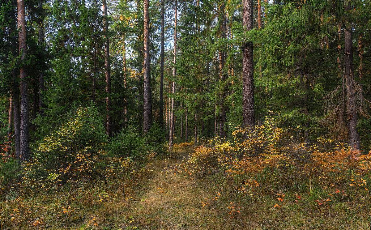 Уральский лес - vladimir
