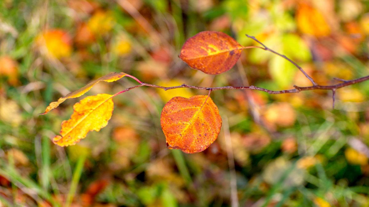 Осенние краски. - Vladimir Lazarev