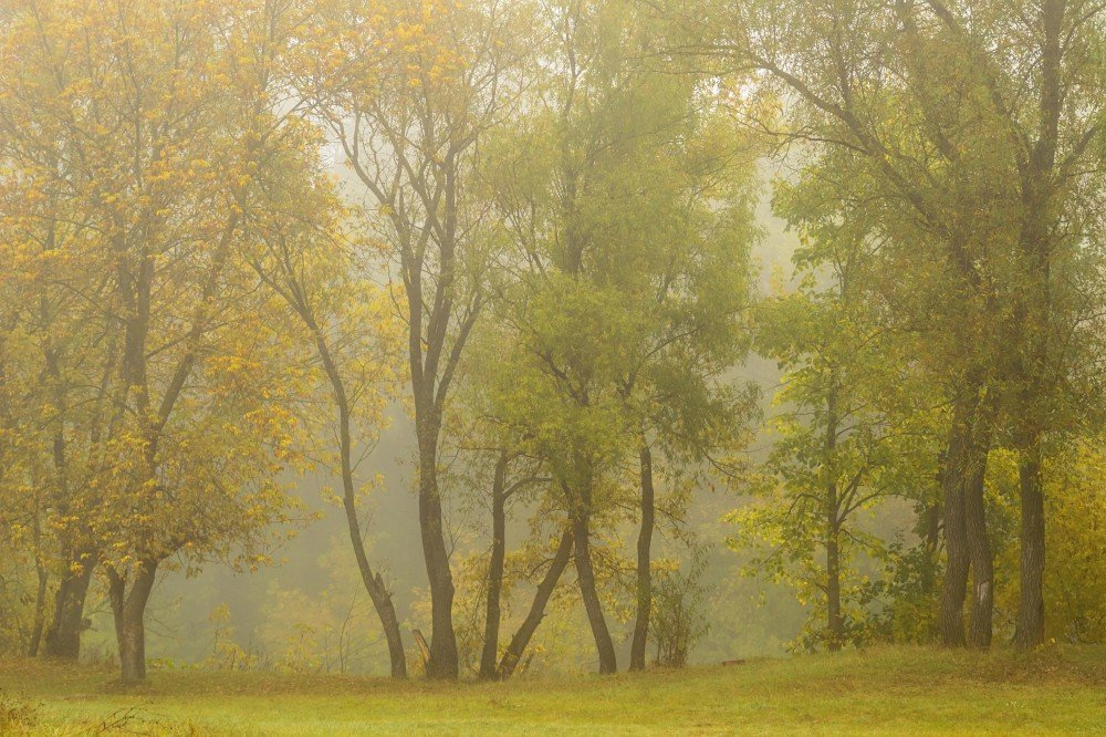 Осень туманная - Сергей Корнев