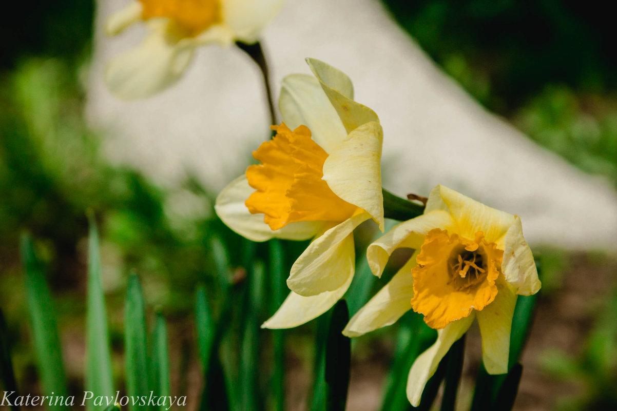 цветы - Катерина