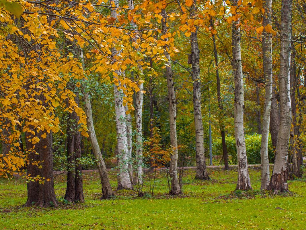 В осеннем парке 4 - Виталий