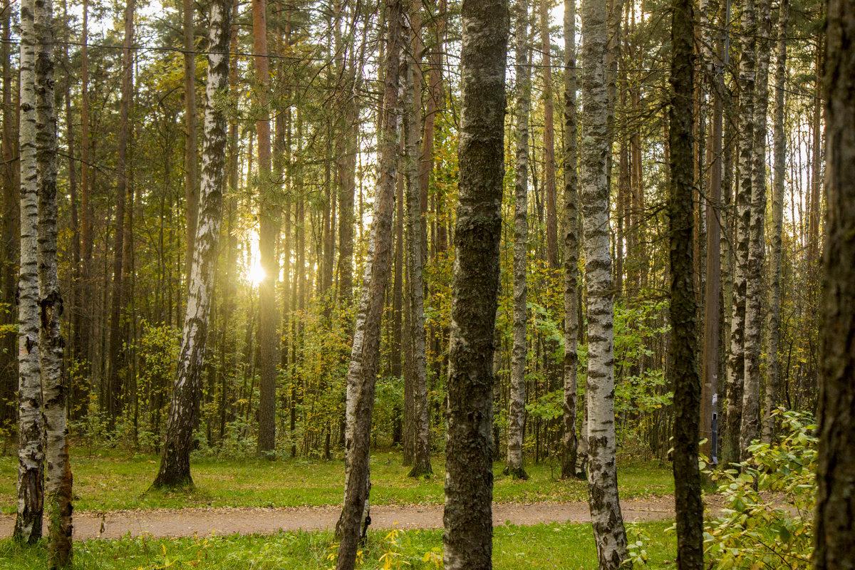 Закат в лесу - Sergey Lebedev
