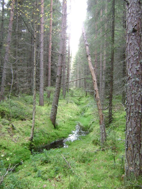 Лесной ручеек - Марина Домосилецкая