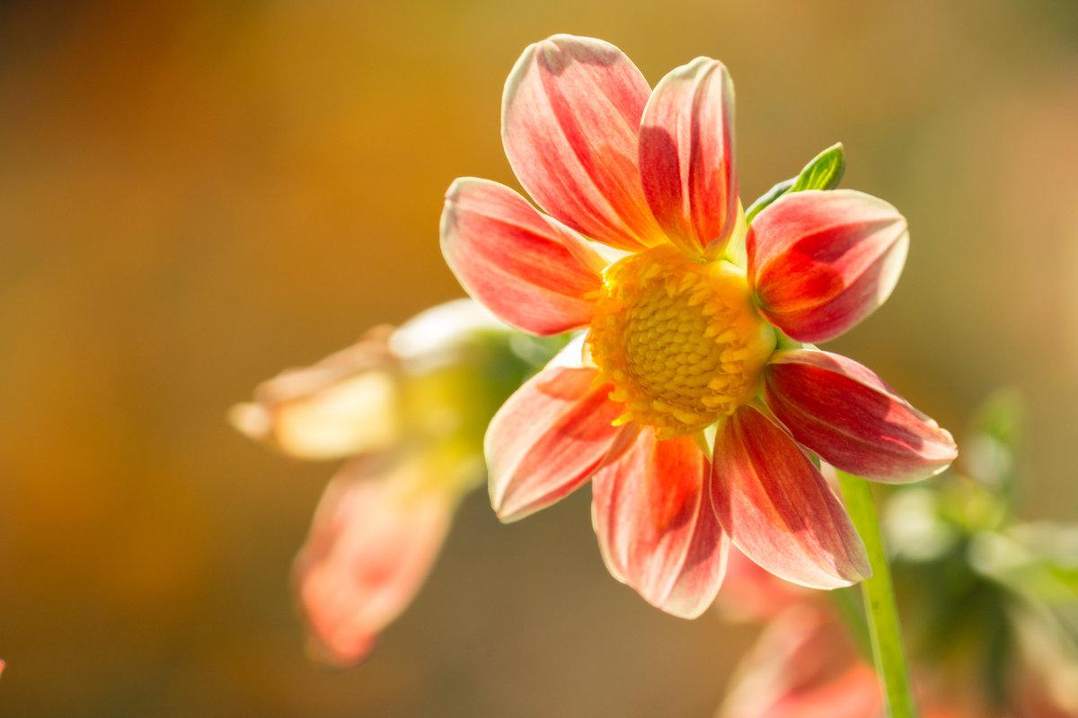 Подскажите название цветка? - Alex Bush