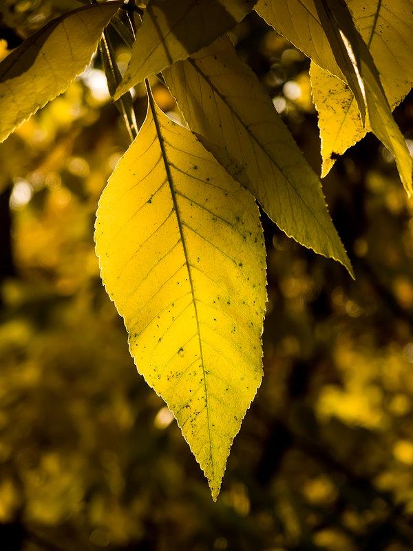 Осень пришла... - Виталий Павлов