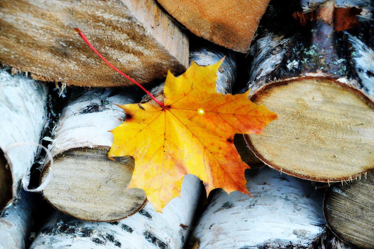 Осень - Елена Третьякова