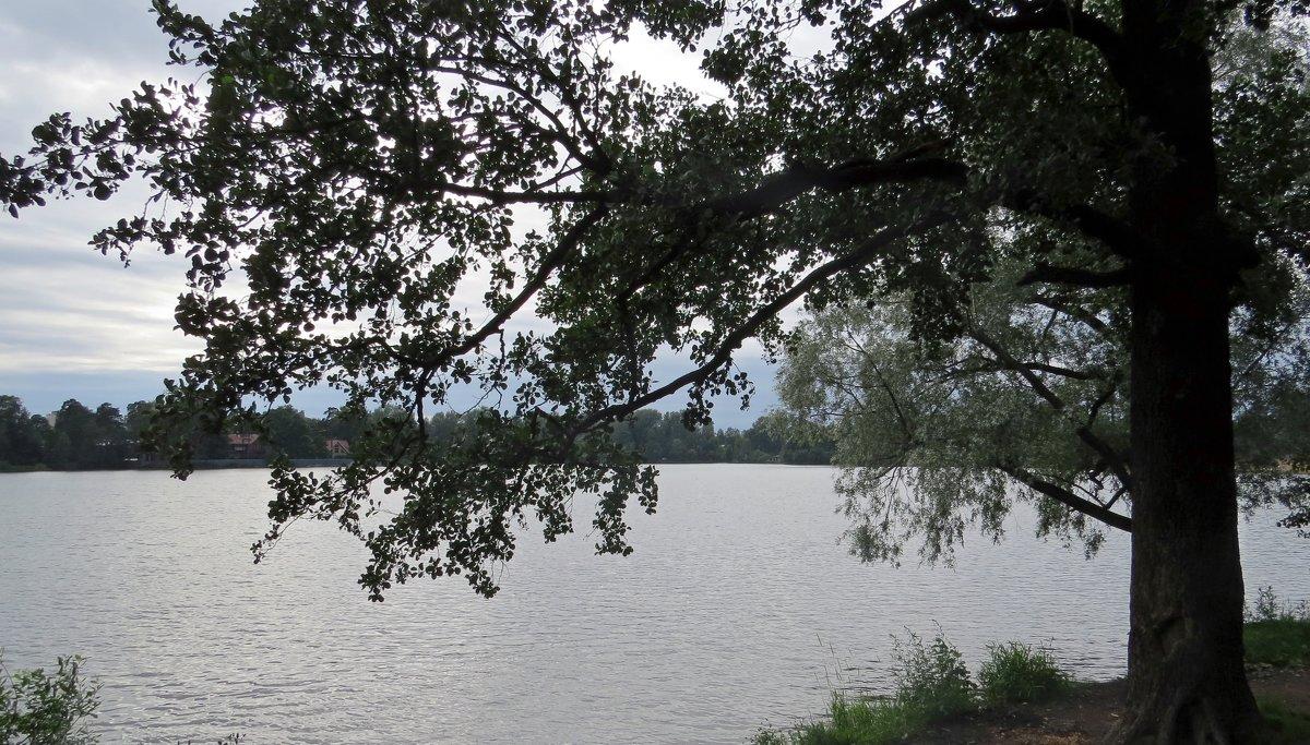 На озере - Вера Щукина