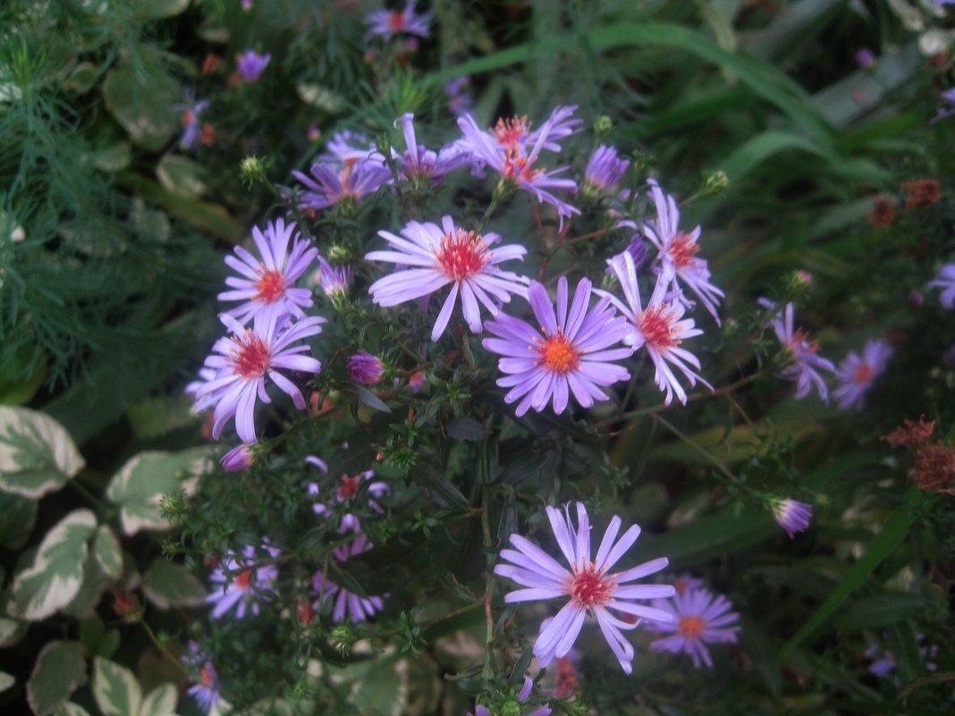 Осенние цветы - Елена Семигина