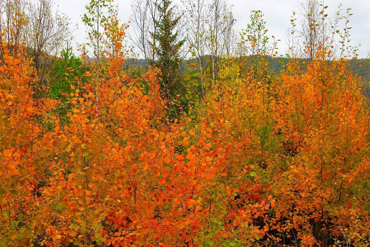 Красное золото осени - Сергей Чиняев