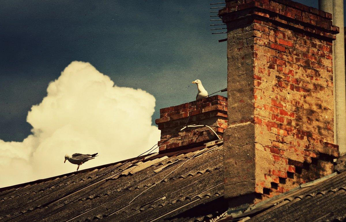 Чайки на крыше - Ольга Мальцева