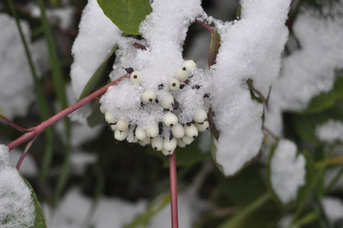 Снежено заснежено - Tatyana Kuchina