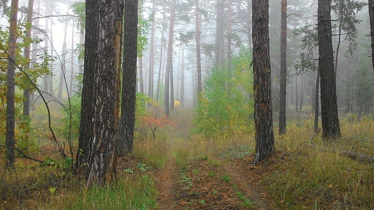 Утро в лесу - IURII