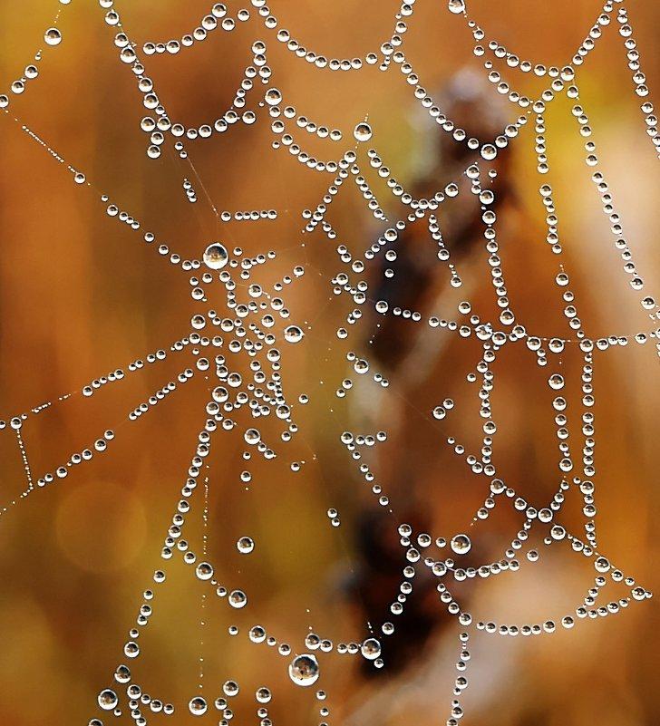 Жемчужная паутина - Alla Swan