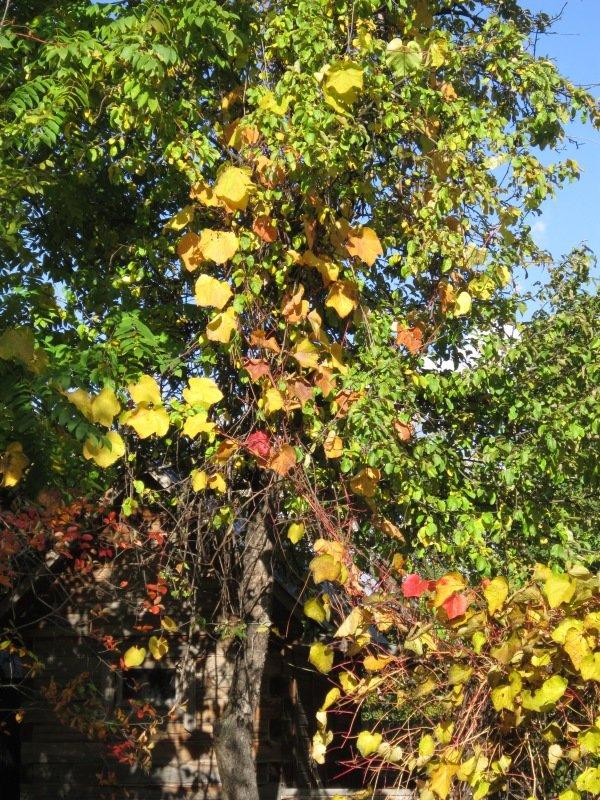 Золотые листья винограда - Дмитрий Никитин