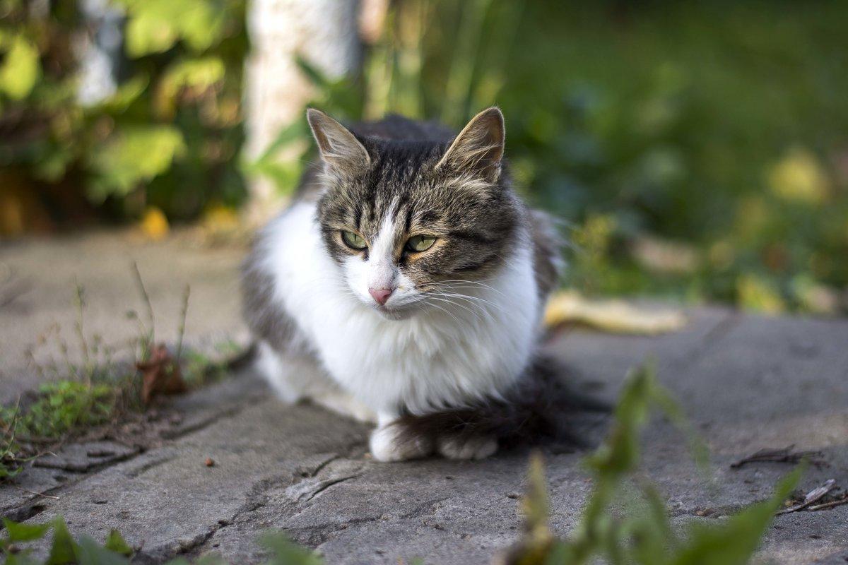 Уличный котик - Галина