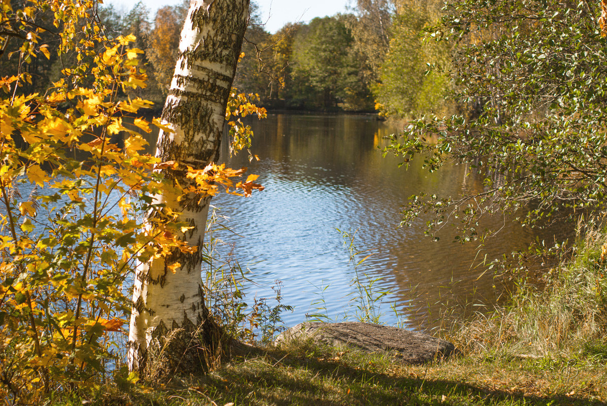 Октябрь уж наступил - Виталий