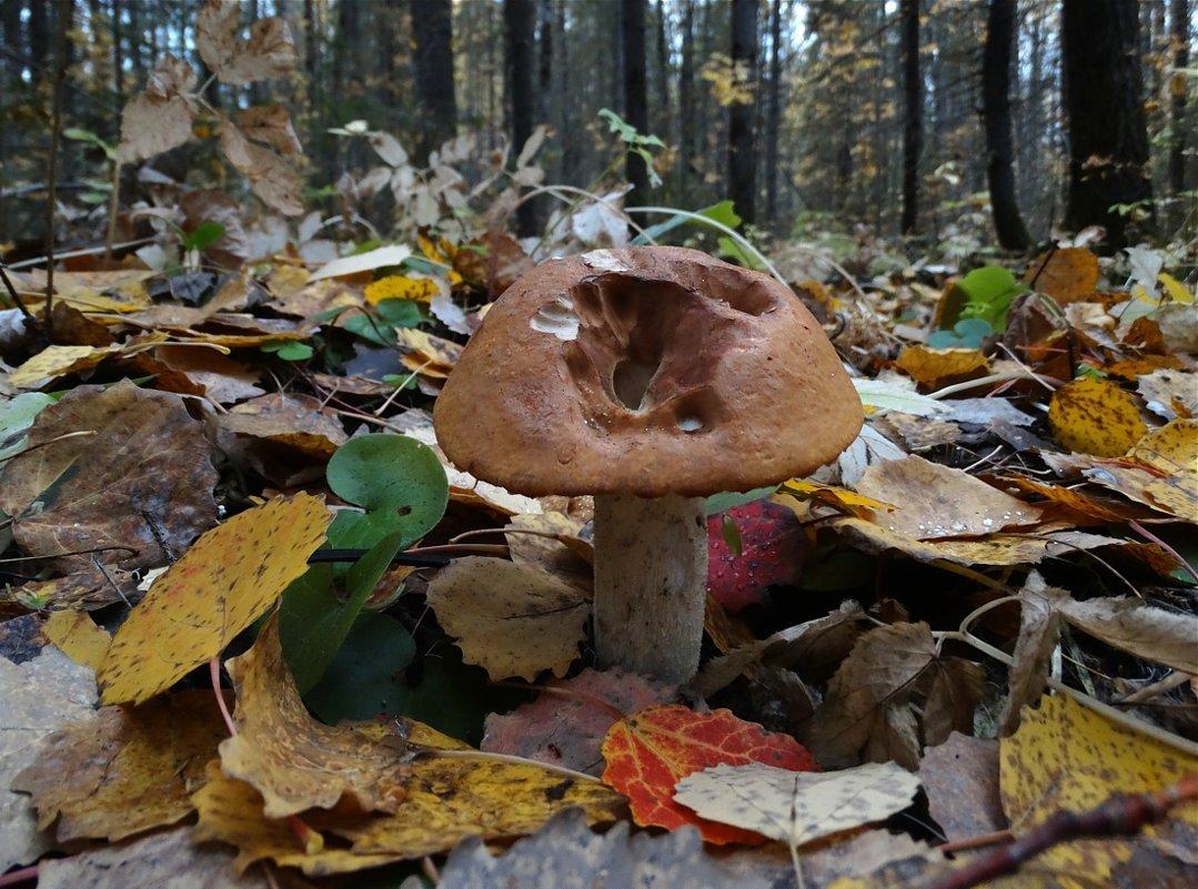 Один в лесу - Валерий Чепкасов
