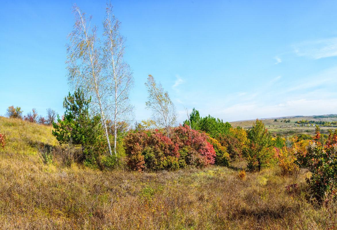Осенние березки - Юрий Шапошник