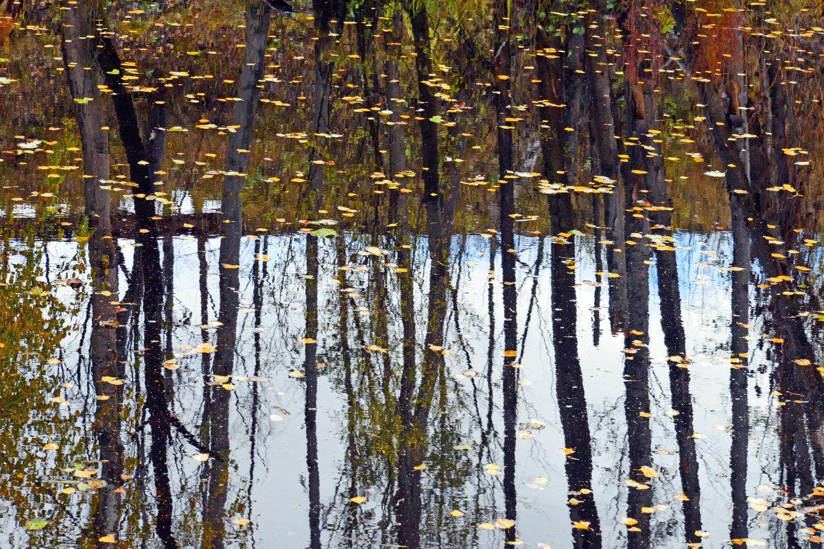 На глади воды - листва и стволы (почти скороговорка) - Полина Потапова