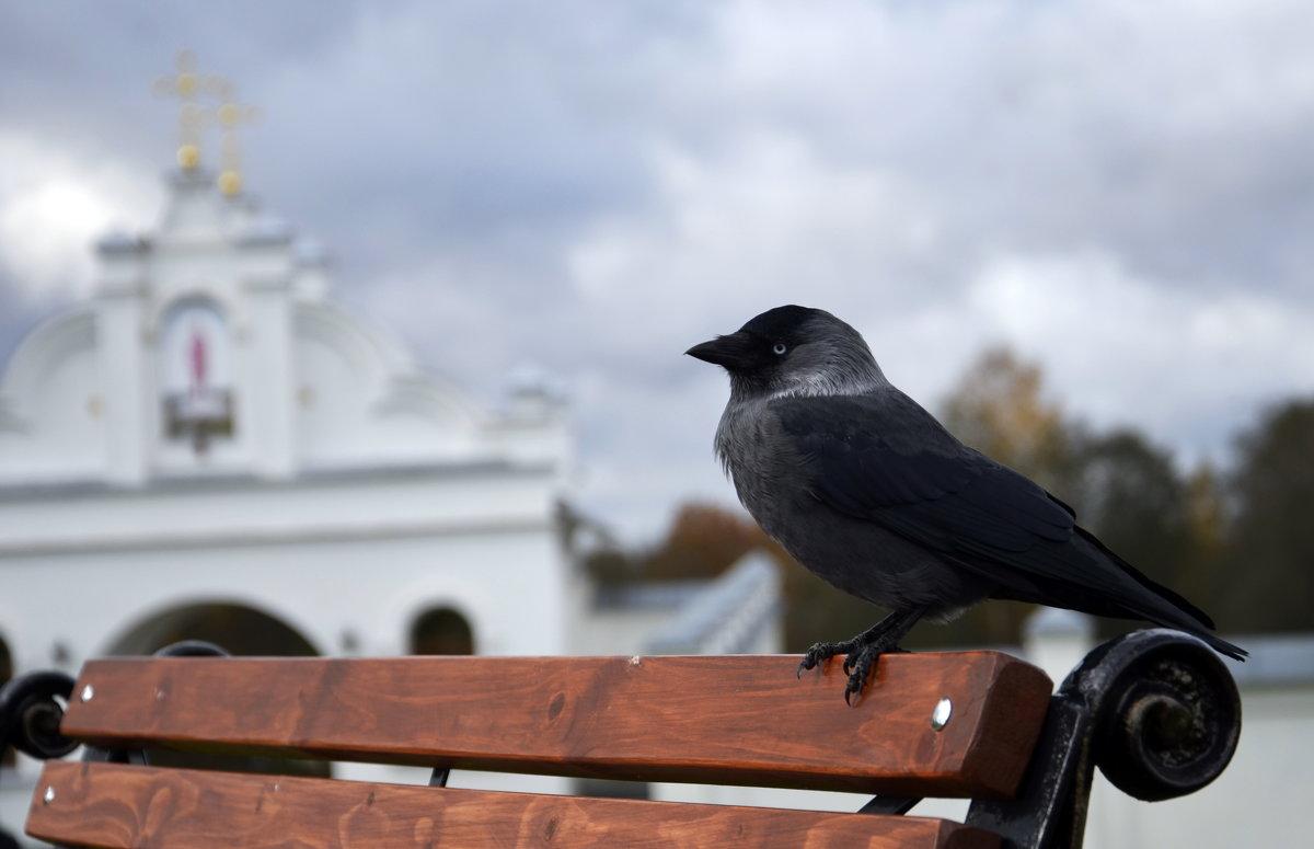 птичка на территории монастыря - Михаил Радин