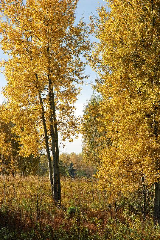 На грани листопада - sergej-smv