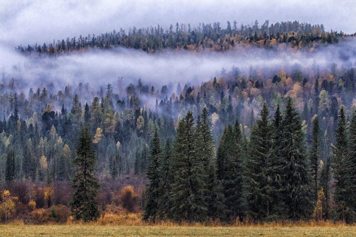 сентябрьские туманы - Галина Шепелева