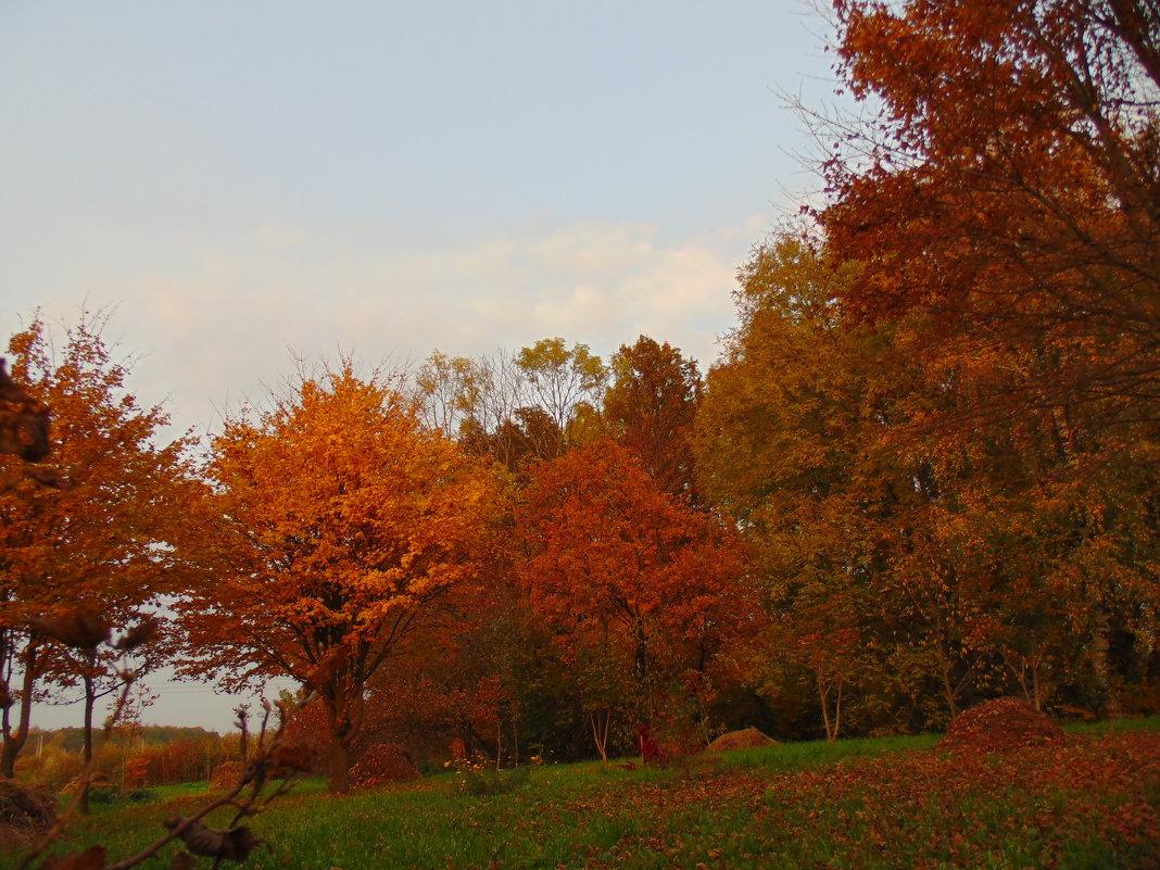 В позолоте лес в октябре. - Людмила Ларина