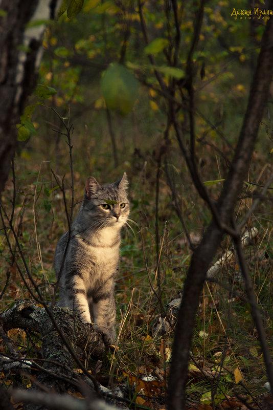 Осенний кот - Ирина Дикая