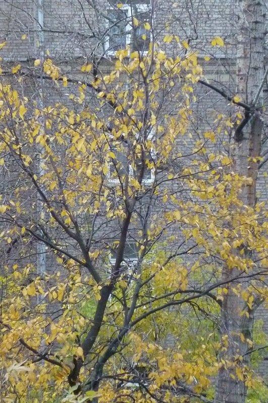 Грустная картина за моим окном... - Татьяна Юрасова