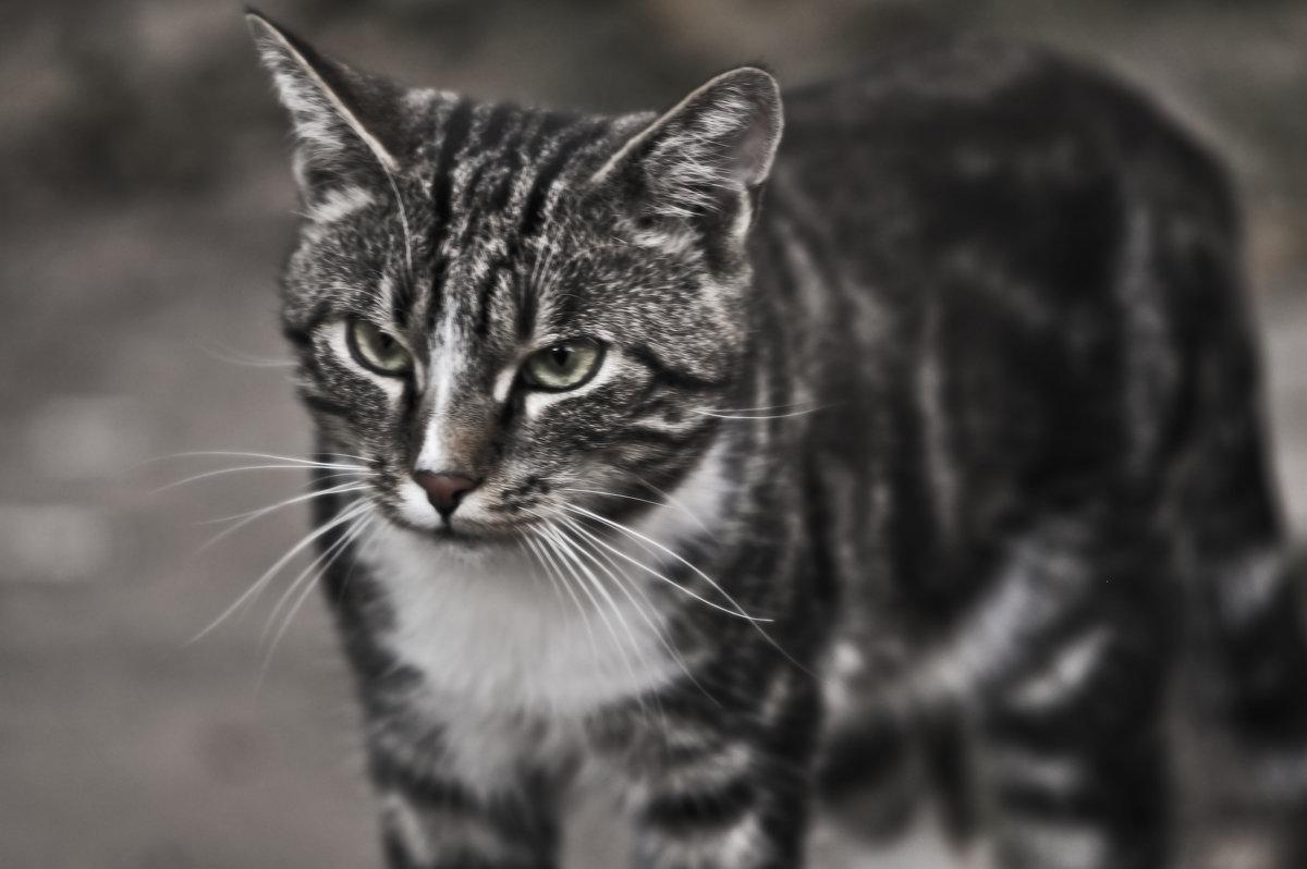 Про жизнь полосатого кота - Ольга Винницкая (Olenka)
