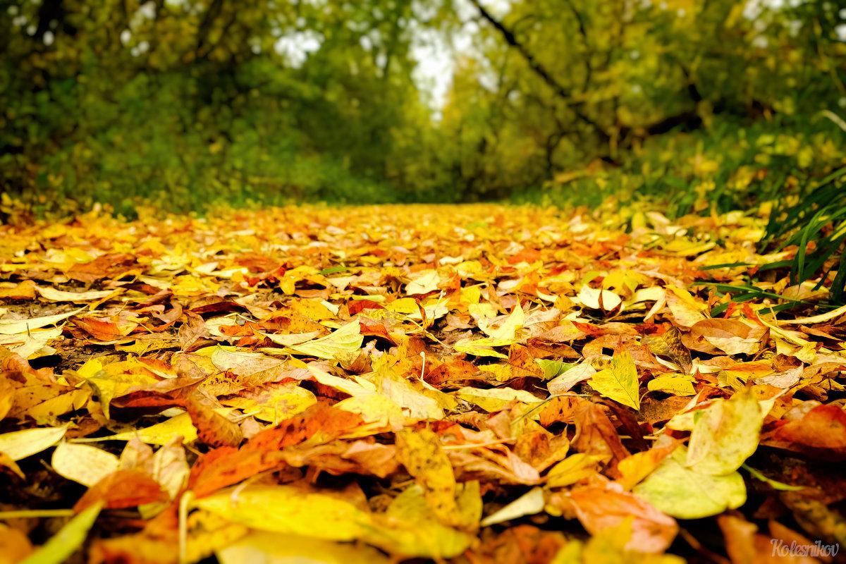 Красота с деревьев устилает землю - Дмитрий Колесников