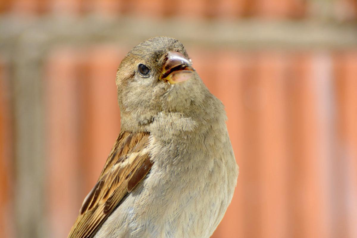 важняк - linnud