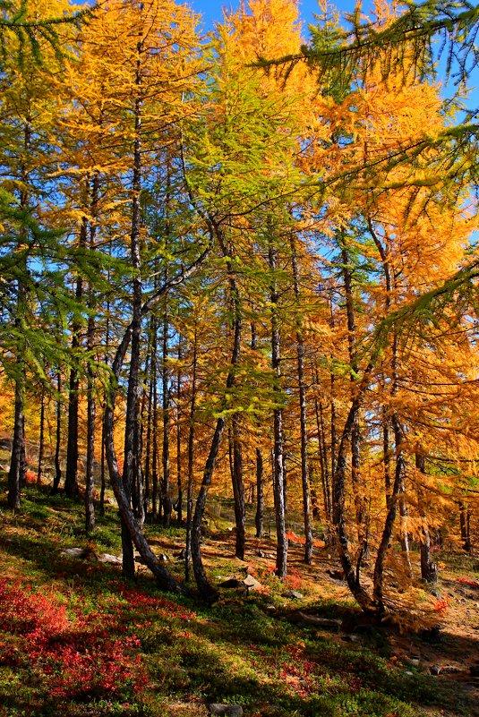 Осенние краски Арктики - Александр Велигура