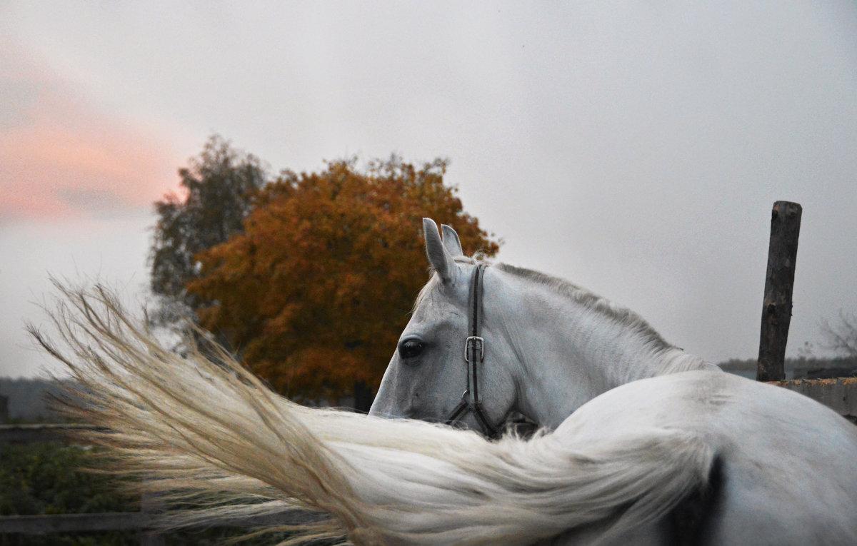 Осень - Анастасия Рыжова