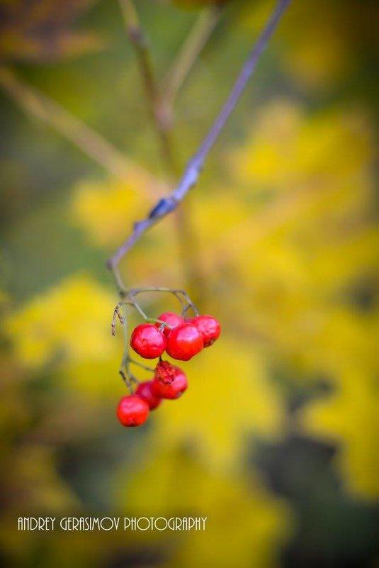 Осень - Андрей Герасимов