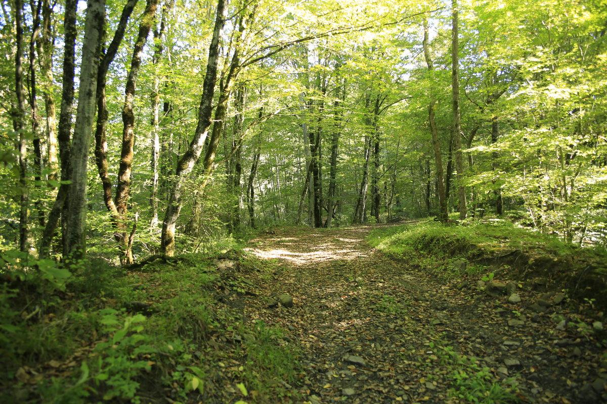 В осеннем лесу - valeriy khlopunov