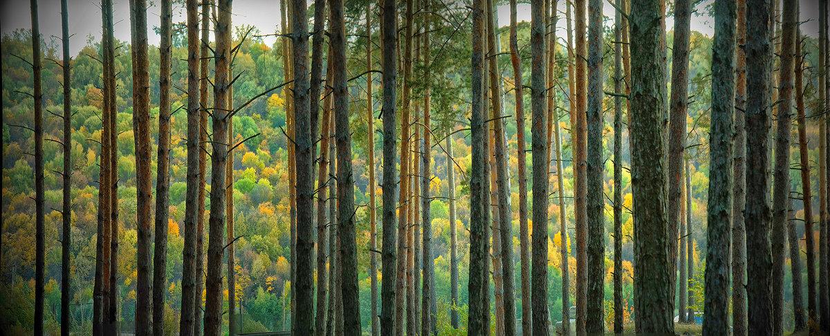 Осенний растр - Юрий