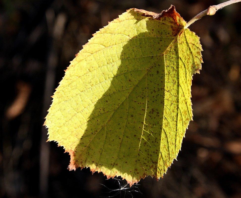 Осенние листья... - Валерия  Полещикова