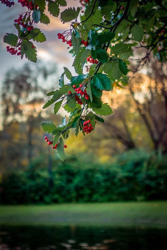 Осень ....Холодно ....Дожди . - Андрей Якимюк