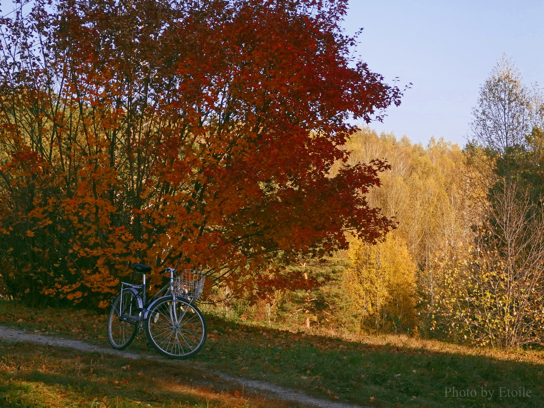 Осенние зарисовки - Lady Etoile