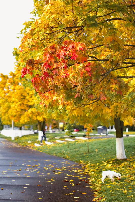 Осень золотая - Алексей Королёв