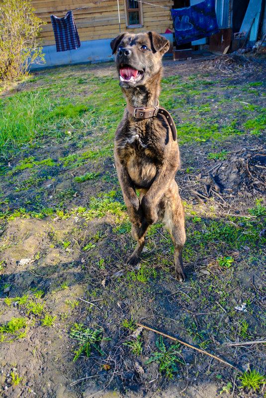 Цирковая собака - Света Кондрашова