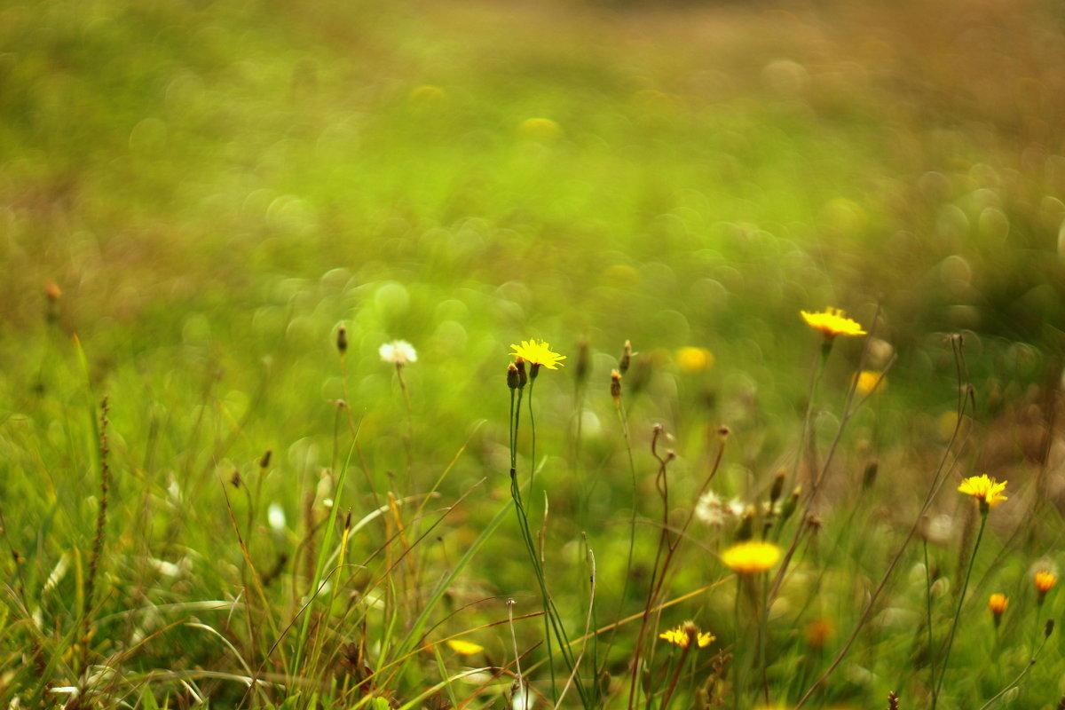 Осенняя  полянка. Гелиос - Лилия Гиндулина